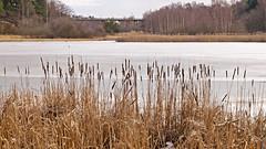 Lake Råcksta Träsk in Stockholm, it's April and the ice remains on the water (Franz Airiman) Tags: stockholm sweden scandinavia råcksta råckstaträsk lakeråckstaträsk lake sjö winter vinter landscape landskap vår spring vårvinter