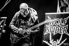 Wolf Spider - live in Metalmania XXIV fot. Łukasz MNTS Miętka-15