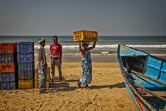 GOKARNA: RETOUR DE LA PÊCHE (pierre.arnoldi) Tags: inde india pierrearnoldi on1photoraw2018 objectiftamron canon6d gokarna karnataka lapêche bateau mer poissons photooriginale photographequébécois photodevoyage pêcheurs