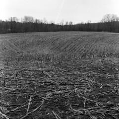 Last Year's Corn Field (pmvarsa) Tags: spring 2018 analog bw blackandwhite film 120 mf 6x6 mediumformat ilford ilfordfp4plus fp4 125iso nikonsupercoolscan9000ed nikon coolscan cans2s mood texture mamiya c33 mamiyac33 classic camera tlr twinlensreflex corn field dry rural farm agriculture art waterloo ontario canada