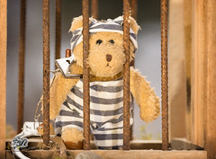 Teddy Bear in prison with Handcuffs (Geert Weggen) Tags: toy handcuffs kidnapping policeforce prison gag humanrights imbalance lock playful risk teddybear tiedup abuse adhesivetape adolescence arrest bear childabuse childhood comparison copyspace crime criminal cute ducttape fragility horizontal law lookingatcamera nopeople photography safety singleobject stealth vulnerability bispgården jämtland sweden geert geertweggen hardeko ragunda
