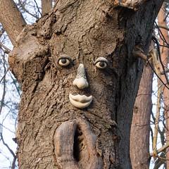 Mein Freund, der Baum (Teelicht) Tags: deutschland germany kühlungsborn meckpomm mecklenburgvorpommern neujahr newyear stadtwald wald forest