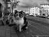 Cat 53 (`ARroWCoLT) Tags: sokakkedisi straycat straycatrules stairs bokeh pet animal depthoffield monochrome bnw bnwstreet streetart street streetphotography outdoor siyahbeyaz art bw blackwhite blackandwhite arrowcolt catstagram catportrait cat nx300 fisheye balıkgözü sidewalk kaldırım road