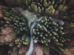 Hidden road (desomnis) Tags: landscape forest woods woodland trees nature road drone droneshot dronephotography path spring green landscapephotography djimavicpro desomnis