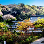 At Engakuji  Temple, Kamakura : 北鎌倉・円覚寺 thumbnail