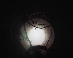 (Inaiê Mello) Tags: light lights trees branches nature garden