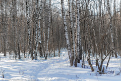 2018-03-19-08-46-34-7D2_4018 (tsup_tuck) Tags: 2018 march moscow spring woods
