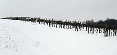 The Vineyard Rests (nrg_crisis) Tags: winter outdoors vineyard snow virginia hillside