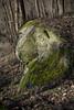 Wald- Luminale-bw_20180324_5720.jpg (Barbara Walzer) Tags: 240318 frühlingswald königsteinimtaunus licht luminale wald