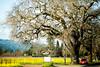 One Tree One Car (Thomas Hawk) Tags: california napa napavalley vineyard vineyards fav10