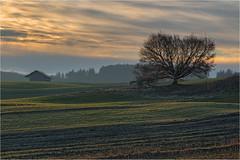 Staudenlandschaft (Robbi Metz) Tags: deutschland germany bayern bavaria stauden augsburgwestlichewälder landscape tree forest sunrise barn colors canoneos