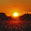 Alive by all means (Robyn Hooz) Tags: tramonto sunset sole spighe nuvola orange cloud alberi cielo campo padova brenta sigh madness sospiro