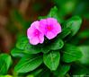 Paree Hut Garden Flowers (Steve Arena) Tags: pareehutresort thailand 2018 kosichang kohsichang nikon d750 chonburi
