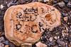 5DM4-8964.jpg (Larry Marotta) Tags: patterns petroglyphwalltrail nevada redrocknationalconservationarea rocks lasvegas unitedstates us