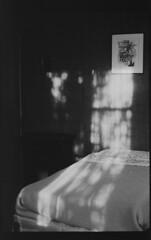 P56-2017-025 (lianefinch) Tags: blackandwhite blackwhite noirblanc noiretblanc bw nb argentique argentic analogique monochrome contraste contrast chiaroscuro clair obscur intérieur indoor chambre bedroom light lumière soleil sun shadow ombre