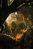 Les promesses d'un jour nouveau - The promises of a new day (Sylvain Paligot - Captures de lumières) Tags: woods light morning forêts forest bois dawn matin soleil lever rayons sunbeam