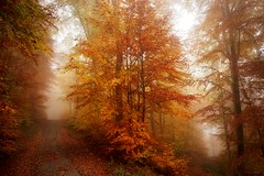 WhichWayShouldITake? (BphotoR) Tags: fog forest woods germany bphotor way decision autumn herbst november junction separation abzweigung