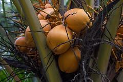 2W0A0953.jpg (Johanna Barton) Tags: ometepe flora nicaragua nature departamentoderivas ni