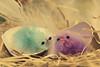 Piou Piou (Cigaleto) Tags: poussins nid paille couleurs