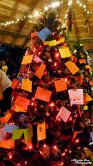 P1650092 (Christen Ann Photography) Tags: 2017 auckland christmas christmaslights christmaslights2017 december2017 lights motat motatevent museumoftransportandtechnology newzealand watermarked westernsprings