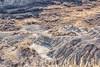 Dinosaur Provincial Park, Alberta (aud.watson) Tags: canada alberta albertaprairie newellcounty dinosaurprovincialpark reddeerriver worldheritagesite prairie grassland badlands fossilbeds sandstone mudstone sandstonecliffs hoodoos canyons ravines gullies aridregion erosion rock rocks sedimentaryrock fossils littlesandstonecoulee