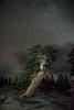 _8105106 (captured by bond) Tags: yosemite treeoftrees tree nighttime nightscape stevebond capturedbybond love