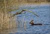 Biesbosch (Museum and trail) (Dutch Simba) Tags: biesbosch wetland nature museum hiking netherlands nederalnd holland