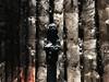 (paol_a_ndrea) Tags: peterzumthor zumthor architecture germany deutschland allemagne religion couleur lumière âpre beton verre symbolique