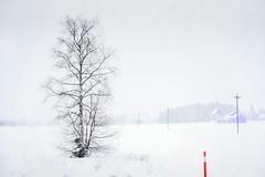 sign (TeRo.A) Tags: maisema landscape talvi winter merkki aurausmerkki