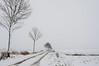 All grey and white. (Sebastiaan14) Tags: winter netherlands zuidholland biesbosch