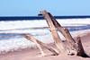 Seawood (izzistudio) Tags: seawood buy photography print etsy shop izzistudio nature seascape sand beach baltic sea ice snow inter sunny day wood horizon