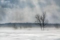blizzard (paul-g-goyette-qc) Tags: neige snow blizzard arbre tree tempête snowstorm