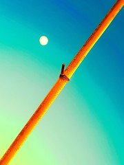 Bambou 2 (Pimenthe) Tags: bamboo nature sky moon tree aesthetic artistic experimental minimal abstract diagonal vertical colors colours colorful colourful hue light simple