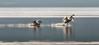 si va (pamo67) Tags: weleave pamo67 cigni swans birds decollo takeoff lago lake riflessi reflections water pasqualemozzillo