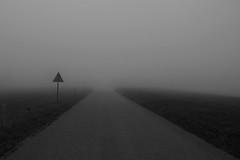 Early Morning (RadarO´Reilly) Tags: nebel dunst fog mist landschaft landscape sw schwarzweis bw blackwhite blanconegro monochrome noiretblanc zwartwit kreuzung crossing grau grey gris grijs strase street glas