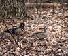 Waddlin'... (Portraying Life, LLC) Tags: auto dbg6 da3004 hd14tc k1 michigan pentax ricoh unitedstates bird closecrop handheld nativelighting skipper forest
