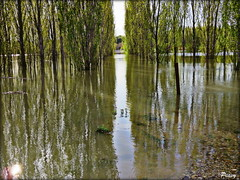 Galacho de Juslibol,Zaragoza (peavy30) Tags: zaragoza galachos juslibol aragon rio ebro crecida extraordinaria agua water arboleda