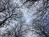 Beeches in Victoria Park (troutcolor) Tags: beech lookingupamongtrees tree sky