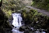 Cascade (_J @BRX) Tags: pucksglenn benmore dunoon scotland uk march 2018 stream waterfall slowshutter lowiso water path tree rocks green