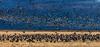 Sandhill Cranes-Sunrise (Paul Malinowski) Tags: sanluisvalley colorado sandhillcranes montevistawildliferefuge birds