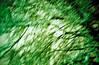 Blurred Nights (013) (romain@pola620) Tags: lomo lomography lca 100 100iso 35 35mm blur blurry flou nuit night light lumière accident green vert film pellicule analog analogue analogique argentique low lowfi vintagecamera vintage grain abstract abstrait minimalism minimaliste tree arbre snow neige
