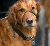 Here's Looking At You (Scott 97006) Tags: cold wet cute dog canine animal pet expression face