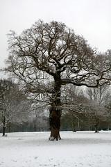 Alone (MPullin) Tags: tree single wood leaves snow