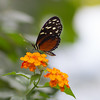 Burgers Zoo - Mangrove (Thea Teijgeler) Tags: butterfly vlinder dierentuin burgerszoo mangrove animal