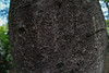 SDQH6183lr (yoshitoshi ABe) Tags: 20180812 吉祥寺 井の頭公園 sdquattroh sigma15mmf28exdgdiagonalfisheye 木