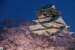 Osaka Castle (yuk_miy) Tags: japan osaka osakacastle nightphotograph nightview nightscape cherryblossom sakura 日本 大阪 大阪城 canon canonphotography