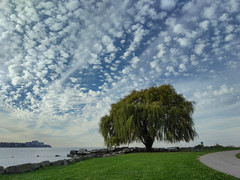 The Lone Willow (michaelwalker19) Tags: