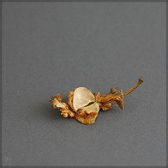 ... (piktorio) Tags: berlin germany fruit apple nature core dry remnant fragment decay food seed piktorio closeup minimal