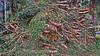 20180331_172539_h (wos---art) Tags: bildschichten schneebruch sturmbruch äste bäume aufräumen haufen