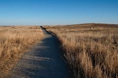Early Winter Nose Hill Path (Bracus Triticum) Tags: early winter nose hill path calgary カルガリー アルバータ州 alberta canada カナダ 12月 december 2017 平成29年 じゅうにがつ 十二月 jūnigatsu 師走 shiwasu priestsrun